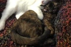 Cozy-Cottage-Cats-copy