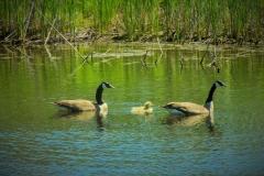 Pond-spring-copy